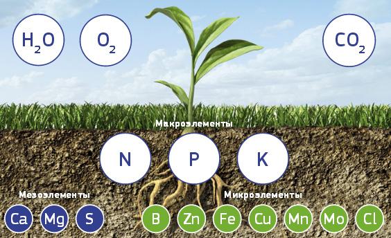 Удобрения Fertika в почве